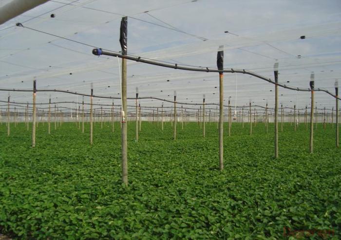 Filets anti gr le degrav 39 agri tout pour produire les - Filet de jardin a oiseaux ...