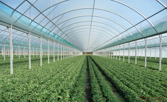 serres degrav 39 agri tout pour produire les fruits rouges et les asperges. Black Bedroom Furniture Sets. Home Design Ideas