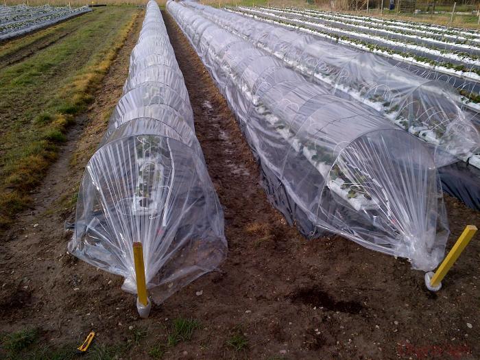 couvertures tunnel nantais degrav 39 agri tout pour produire les fruits rouges et les asperges. Black Bedroom Furniture Sets. Home Design Ideas