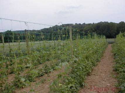 filets ramer degrav 39 agri tout pour produire les fruits rouges et les asperges. Black Bedroom Furniture Sets. Home Design Ideas