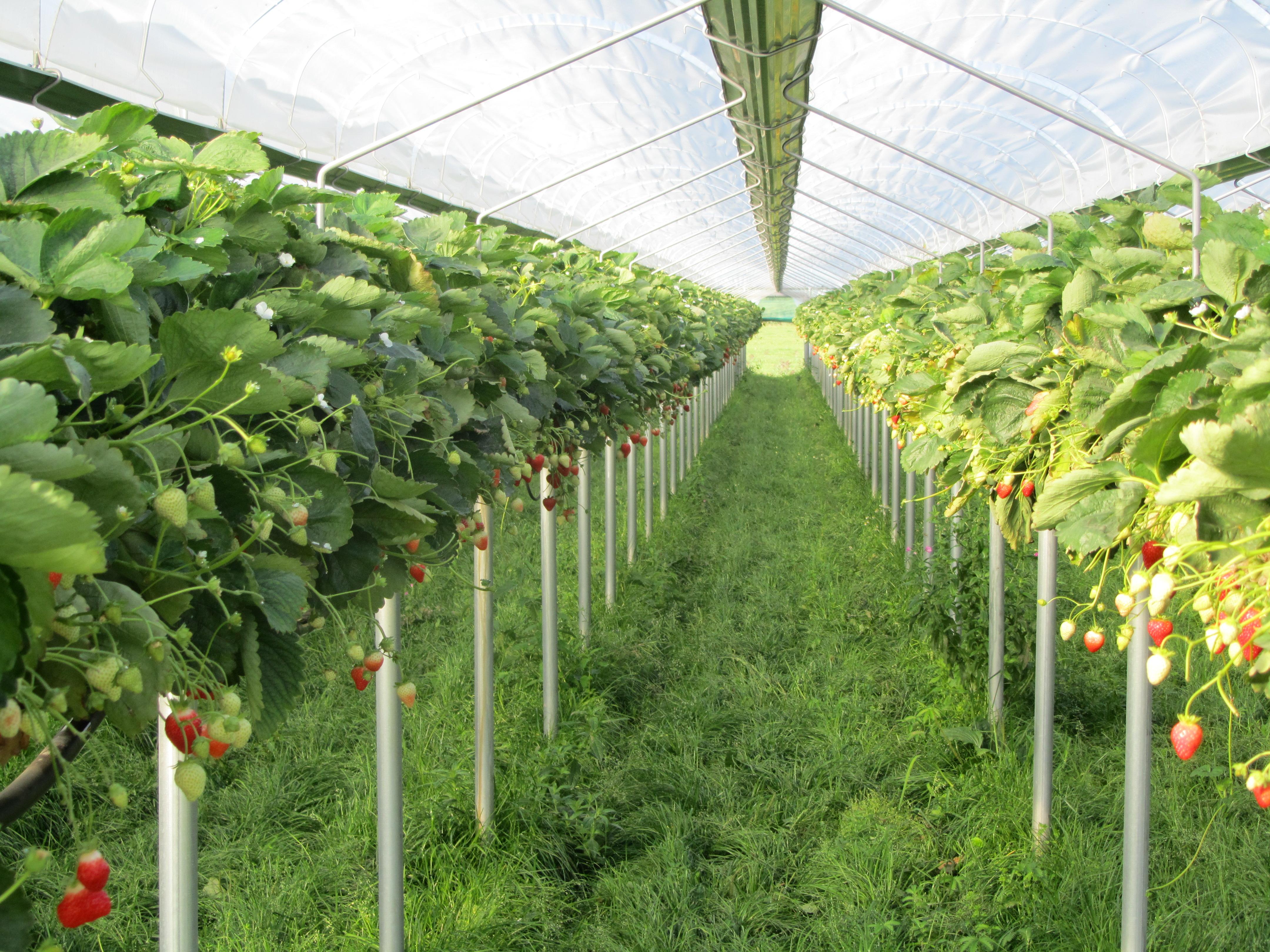 accessoires pour culture hors sol degrav 39 agri tout pour produire les fruits rouges et les asperges. Black Bedroom Furniture Sets. Home Design Ideas