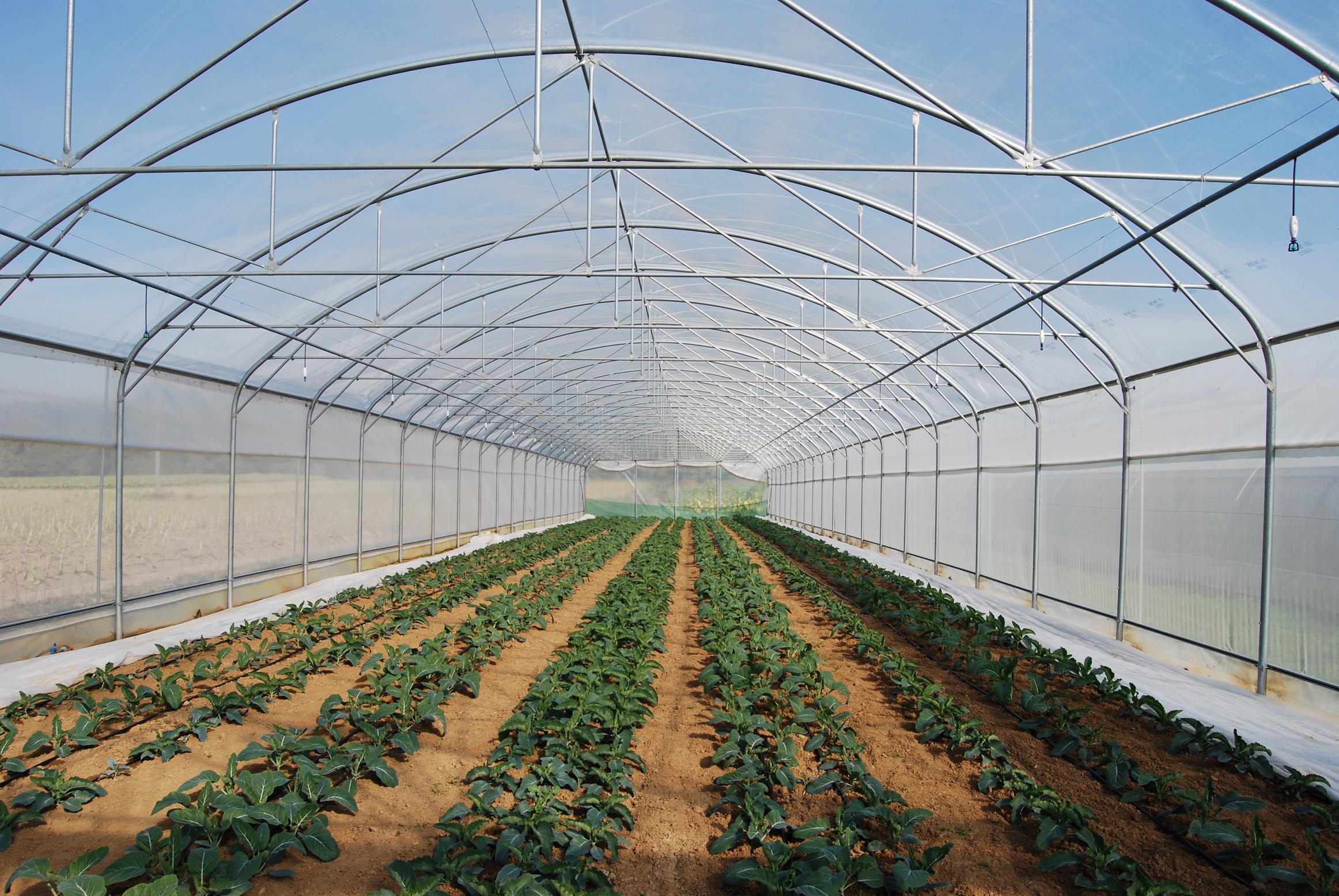 tunnels pieds droits degrav 39 agri tout pour produire les fruits rouges et les asperges. Black Bedroom Furniture Sets. Home Design Ideas